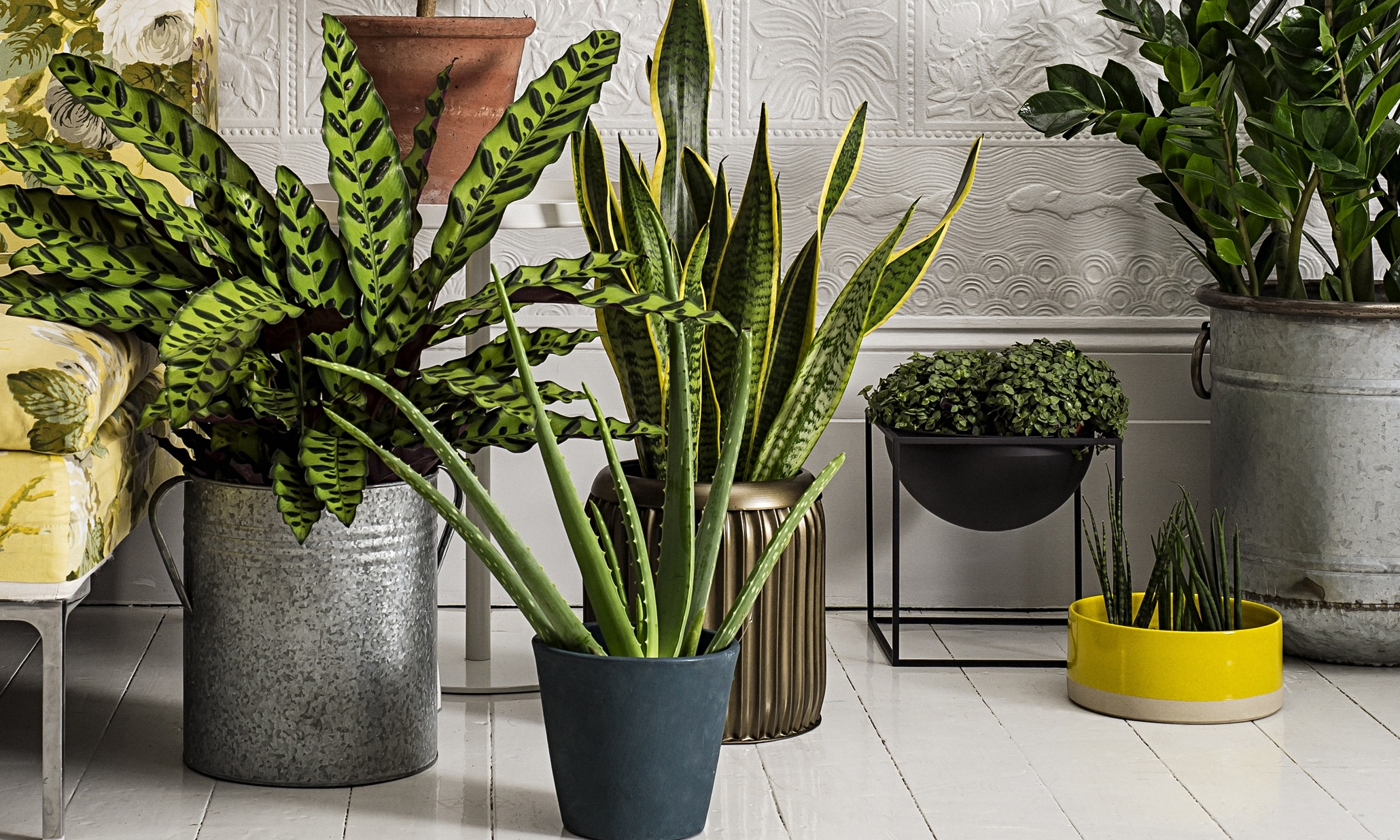 How to Introduce Plants to Your Home