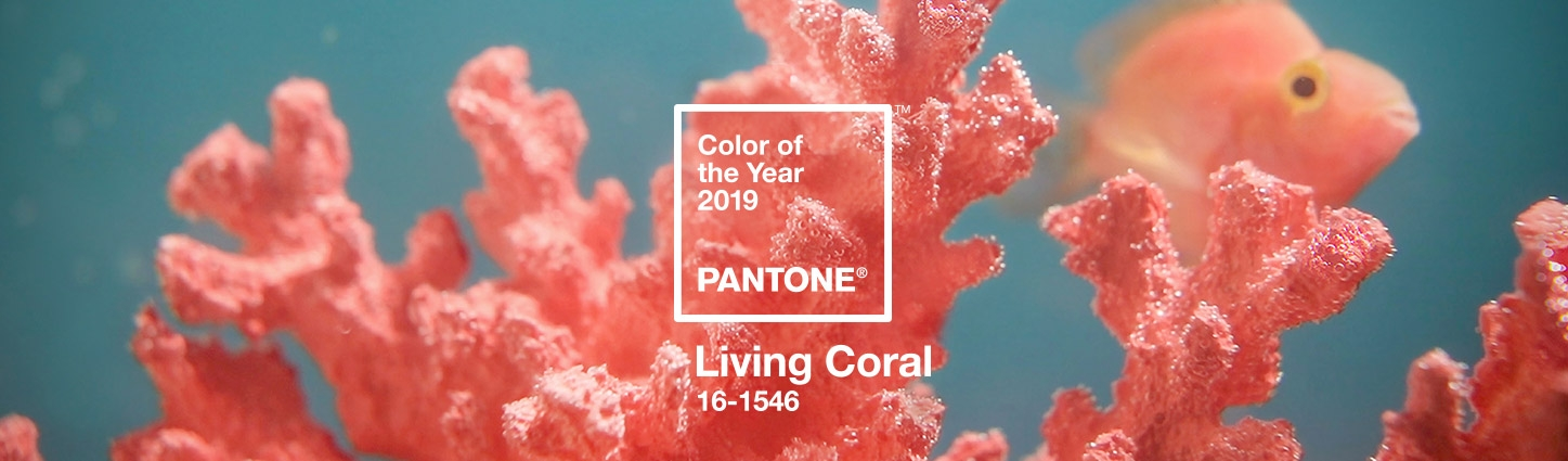 First Look: PANTONE Colour of 2019